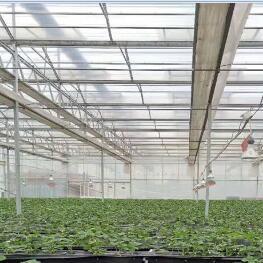 溫室大棚陽光板